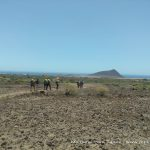 XIII Ruta Camino del Hermano Pedro - Montaña Roja al fondo